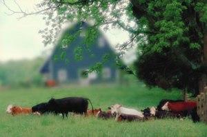 gambar diambil dari http://www.luskeye.com/myopia.html